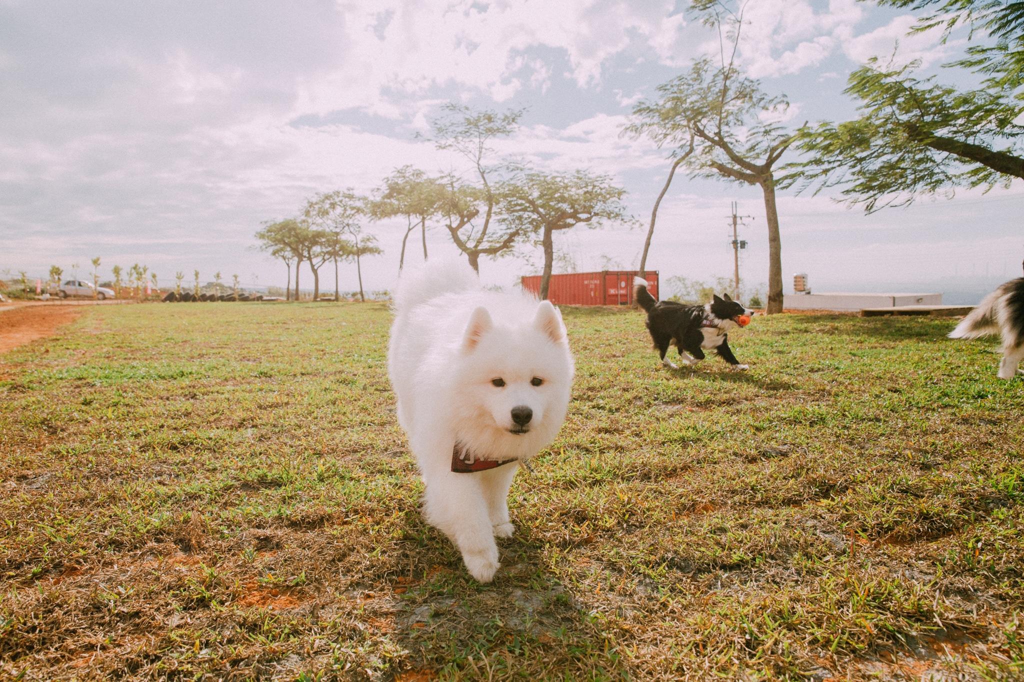 哈 Dog Life Ha Dog Life